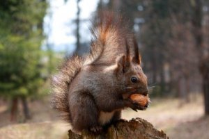 squirrel-eating-a-nut